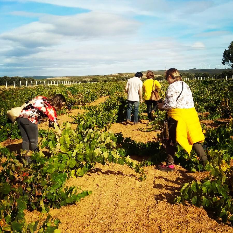 Visita al viñedo experiencia wine tasting