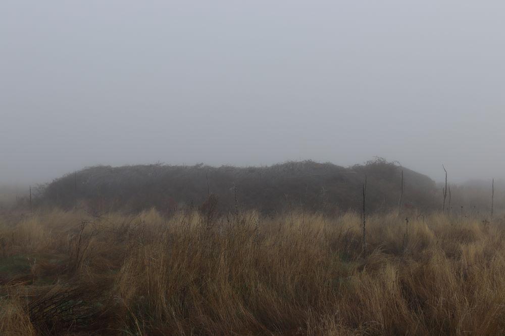 corrales con niebla